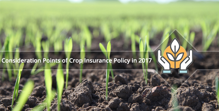 Points of Consideration When Choosing a Crop Insurance Policy in 2017